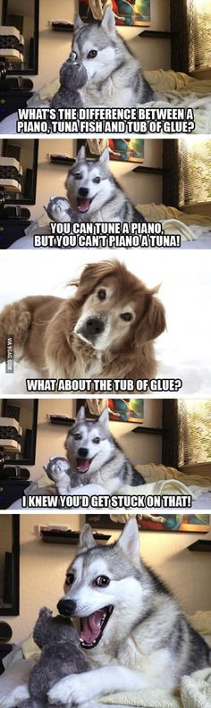 Pun Husky Strikes Again