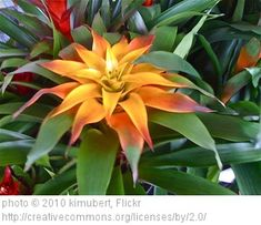Low Light Flowering House Plants peperomias are small, easy-care houseplants for low to medium
