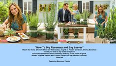 SET YOUR DVR'S FOR TOMORROW! Learn how to make your own rosemary and bay leaves spice from your home-grown plants with Foodie Gardener, Shirley Bovshow.  So easy. WIth Mark Steines and Cristina Ferrare Featuring Monrovia Plants.