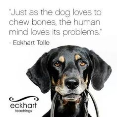 Just as the dog loves to chew bones, the human mind loves its problems. ~ Eckhart Tolle