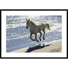 Global Gallery Camargue Horse Running on the Beach, Camargue, France by Konrad Wothe Framed Photographic Print Size: