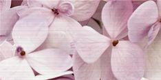 """""""Аромат"""" - Вставка декоративная 500х250 Rose, Flowers, Plants, Pink, Roses, Flora, Royal Icing Flowers, Floral, Plant"""