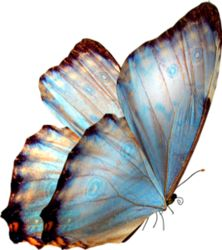 This PNG image was uploaded on March pm by user: and is about Computer Graphics, Arthropod, Brush Footed Butterfly, Butterflies, Butterfly Group. Butterfly Drawing, Butterfly Painting, Butterfly Wallpaper, Butterfly Project, Butterfly Watercolor, Butterfly Kisses, Blue Butterfly, Monarch Butterfly, Borboleta Tattoo