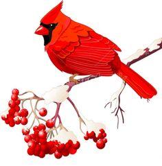 "Cardinal Sitting On Ash Branch Cross Stitch Pattern***L@@K***YOUR FINISHED PATTERN SIZE. 280 Stitches x 280 Stitches 20.0"" X 20.0"" ON (14 COUNT) AIDA CLOTH. ~~ I SEND WORLD-WIDE ~~Free"
