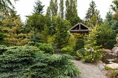 American Conifer Society, evergreens, foliage gardens