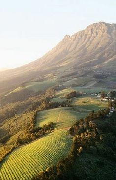 Stellenbosch wine farms - South Africa. South Africa has the longest wine route ... #SouthAfrica - Urban Angels
