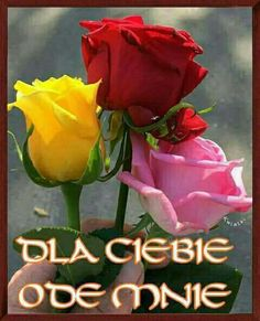 Tare liye apni jaan bhi derti do. Per tu muje meri terha pyar tu ker. Morning Rose, Good Morning Flowers, Good Morning Images, My Flower, Pretty Flowers, Flower Power, Yellow Roses, Red Roses, Good Day Sunshine