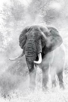 Why you should support World Elephant Day this year - Getaway Magazine