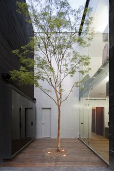 Narrow internal courtyard with tree growing through the decking. Uplights to highlight the tree at night