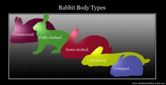 Perfect!!! Rabbit body types for teaching our younger members!