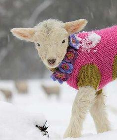 ヤギもセーターを?
