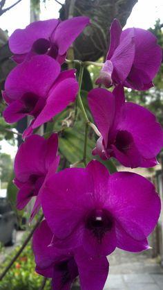 Orquídea na unidade barra
