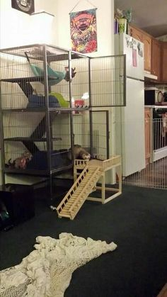 ferret naiton and critter nation stairs