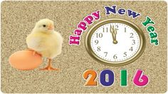 happy new year 2016 photos - Google Search