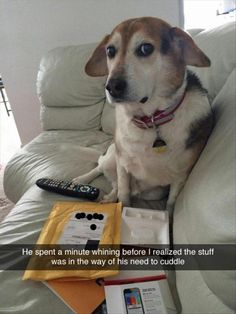 LOL Funny Animals gallery (07:40:36 PM, Friday 15, May 2015) – 20 pics