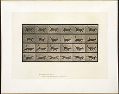 Animal locomotion. Plate 716 by Boston Public Library, via Flickr