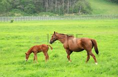 foals spring: Foal with a mare on a spring pasture