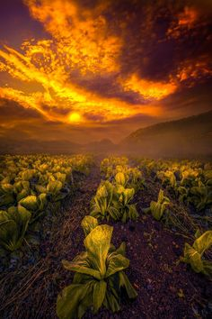 Dare to Dream  #sky  sunset landscape nature light sun dusk dawn
