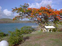 Flamboyant - Photos de vacances de Antilles Location #Martinique