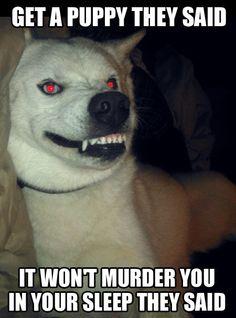 1000+ images about Huskys on Pinterest | Husky, Siberian ...