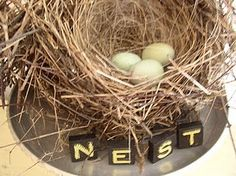 One of my favorite nests