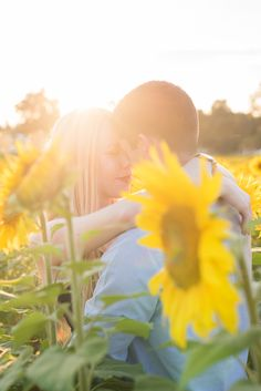 Simply Picturesque Maryland Lifestyle Photographer couple in sunflower field looking at each other forehead to forehead smiling at each other during sunset