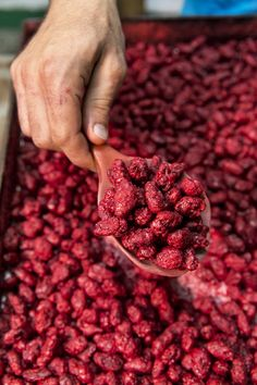 You'll find these crimson caramelised almonds on the Island of Kefalonia (Cephalonia). They're called Mandoles. Trotter, Greek Life, Greece Travel, Greek Islands, Almonds, Raspberry, Globe, Fruit, Eat