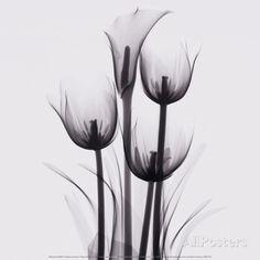オールポスターズの マリアンヌ・ハース「Tulips and Arum Lily」高品質プリント