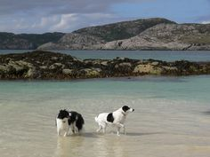 Achmelvich, Sutherland. The water is Caribbean blue here...awesome beach. Way in northern highlands!
