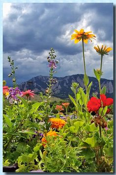 Colorado summer flowers TRAVEL COLORADO USA BY  MultiCityWorldTravel.Com For Hotels-Flights Bookings Globally Save Up To 80% On Travel Cost Easily find the best price and ...