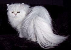 Характер кошки   BeautyInfo