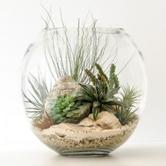 HPT-terrarium-fishbowl-classic-desert-xl-1000px-7399