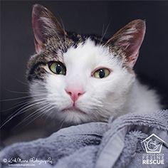 Adopt Near You Pet Adoption Center Saving Cat Love Your Pet Day