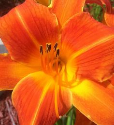 Orange Lily Photograph by Saribelle Rodriguez - Orange Lily Fine Art Prints and Posters for Sale