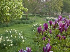 Botticelli meadow and crocus lawns of Pettifers Garden, Oxfordshire, UK. Photo by Andrew Lawson.
