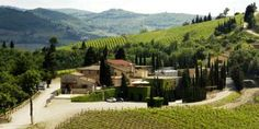 Villa Cafaggio-Beautiful winery to visit and there is olive oil as well.