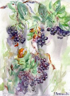 Purple Chokeberry in Watercolor by Linandara on Etsy