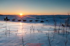 Jeff King runs past an overflow glacier at sunrise as he leaves the Koyuk checkpoint on Monday March 14th during the 2016 Iditarod. Alaska Photo by Jeff Schultz