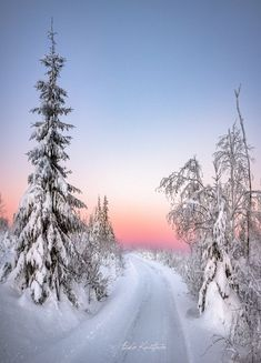Winter Time, Winter Holidays, Great Photos, Cool Pictures, Winter Beauty, Nature Animals, Winter Scenes, Amazing Nature, Mother Earth
