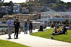 Shoreline Park grass