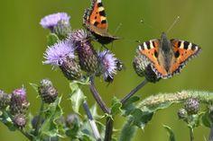Natuurlijk tuinieren. Dit is waar je het allemaal voor doet! Veel vlinders, insecten, vogels en egeltjes in de tuin.
