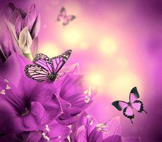 бабочки - Поиск в Google