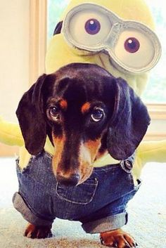 Captivating 20 Ways To Dress Up Your Dog This Halloween Via @PureWow