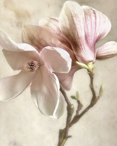 Decorate your wall with this beautiful 'Pink Magnolia II' piece of art. This contemporary piece is designed to fit any decor and with the small size, you will be able to find a spot for it anywhere on