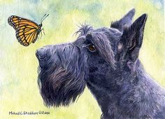 """Close Encounters"" A Limited Edition Scottish Terrier Print"