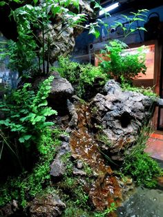 Paludarium with water fall cave and ponds terrarium Bartagamen Terrarium, Terrarium Reptile, Reptile House, Reptile Habitat, Reptile Cage, Crested Gecko Vivarium, Red Eyed Crocodile Skink, Leopard Gecko Terrarium, Gardening