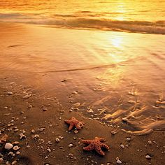 Coastal Living Magazine readers voted Sanibel Island one of the happiest seaside towns in America!