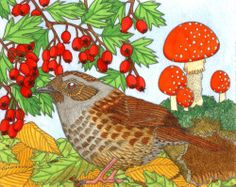 Dunnock, self-initiated Christmas card design © Emma Cowley all rights reserved
