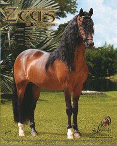 Beautiful Horses, Most Beautiful, Pony, Wildlife, Creatures, Quarter Horses, Adventure, Mustangs, Cats