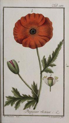 Poppy:  1779 - v.2 - Icones plantarum medicinalium. - Biodiversity Heritage Library